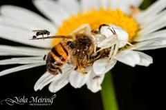 nola-meiring-photography03