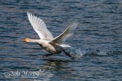 nola-meiring-photography04