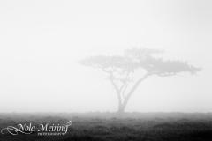 nola-meiring-photography10