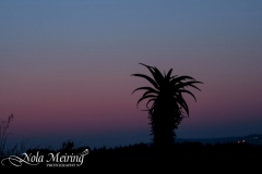 nola-meiring-photography15
