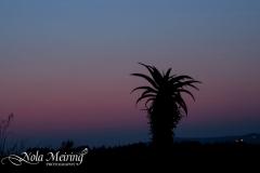 nola-meiring-photography15