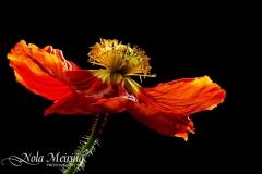 nola-meiring-photography17