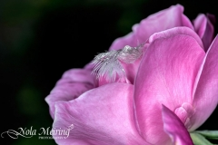 nola-meiring-photography19